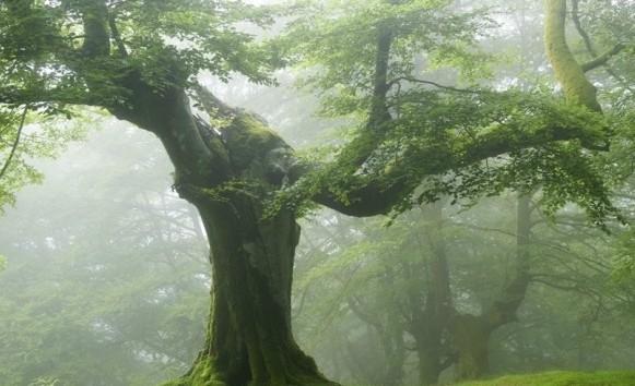 茂盛的像森林一样.jpg