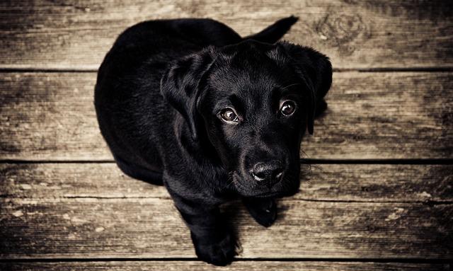 puppy-336707_640.jpg