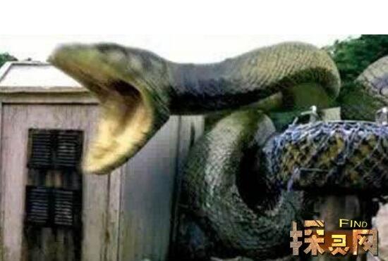 贵州挖出4吨大蛇后放生,并封闭山洞和大蛇消息(却遭蛇报复)