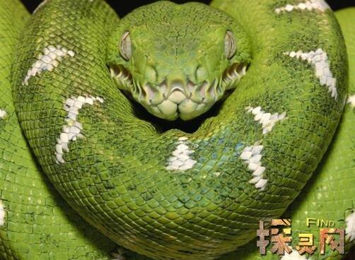 世界上最致命的蛇_蛇图片 第20张